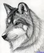 The Wolf @ MOTD
